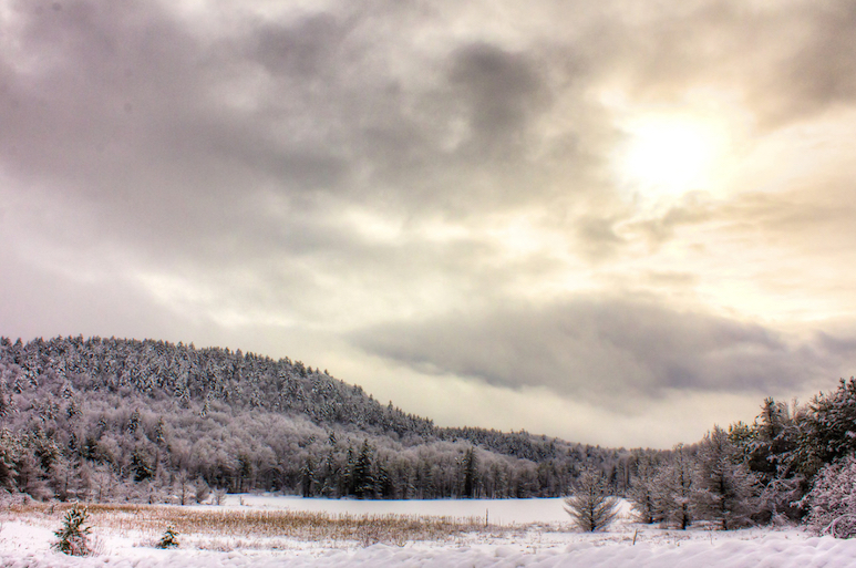 Photo of a winter landscape with frost and snow on evergreen trees